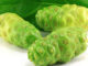 Noni Health Benefits