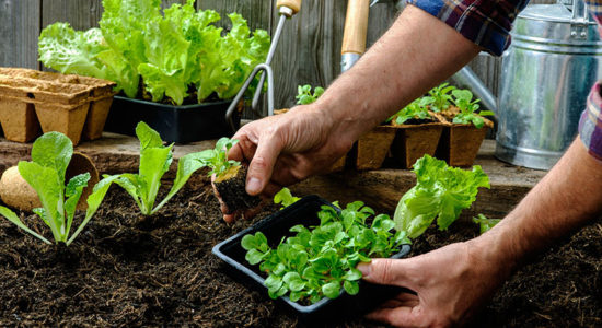 Reasons Why You Should Start A Vegetable Patch